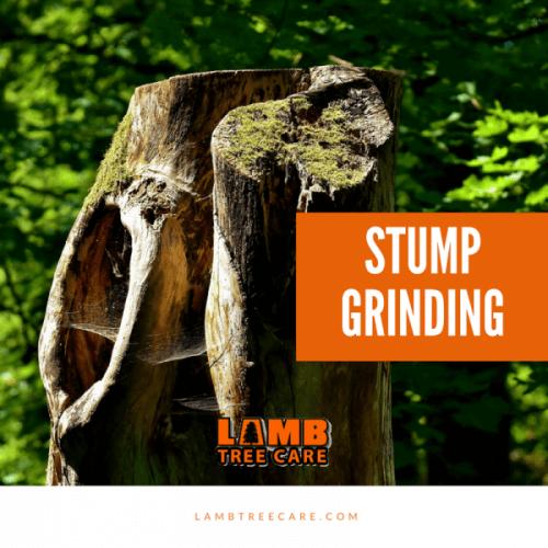 Stump Grinding in Sarasota