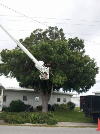 Tree Trimming Sarasota