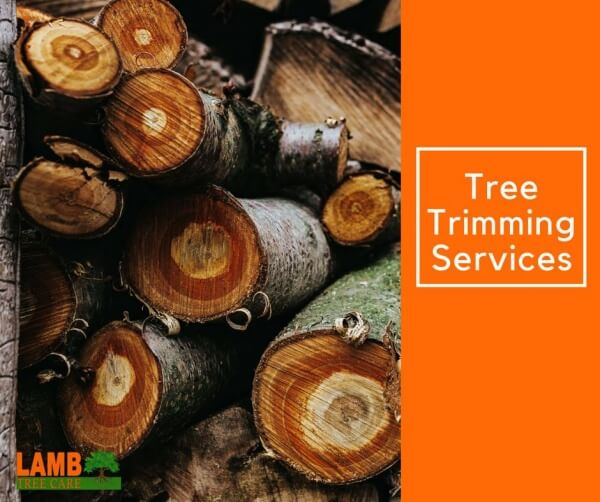 Tree Trimming Services from Lamb Tree Care