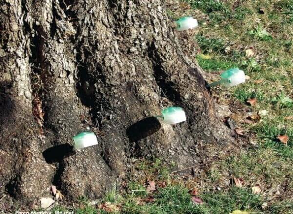 Tree Injections near Venice