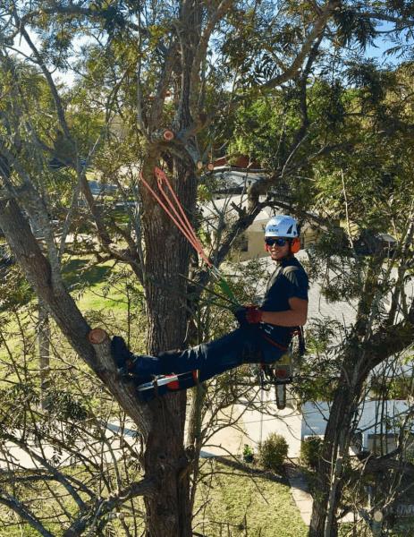 Tree Service in Sarasota