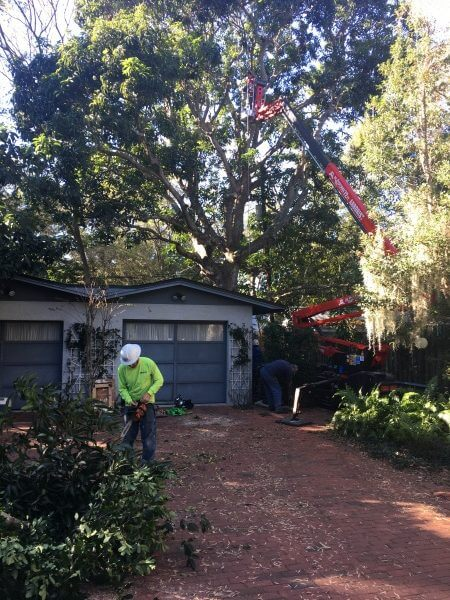 tree service company sarasota