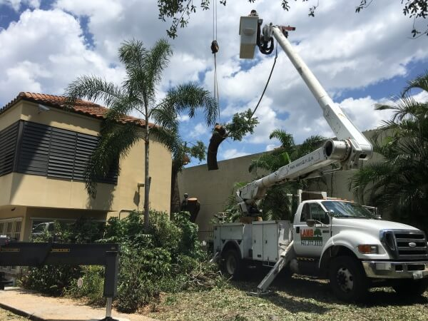 Tree Removal from Lamb Tree Care Sarasota