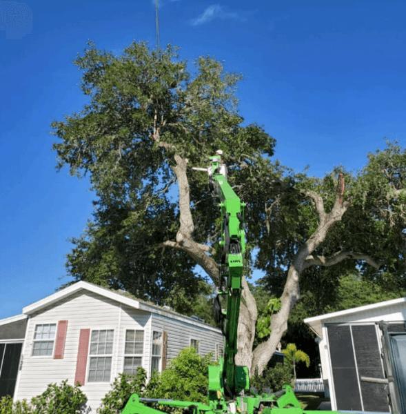 sarasota tree trimming