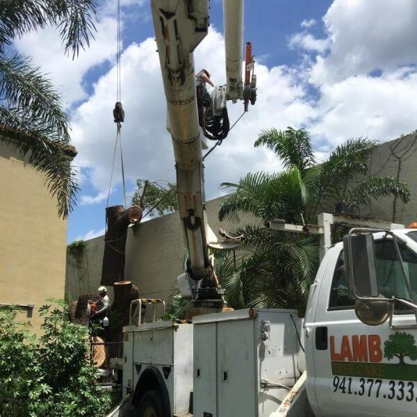 sarasota tree removal