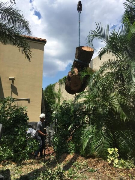 Tree Removal with Crane Lamb Tree Care