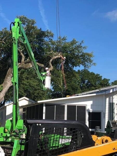 Tree Removal Services near Venice
