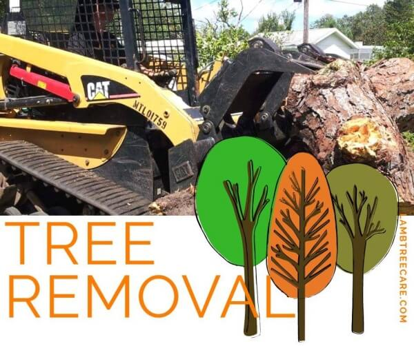 Tree Removal in Sarasota