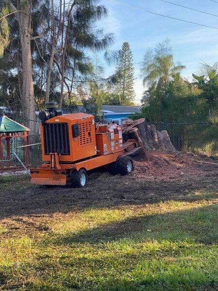 Stump Removal in Sarasota