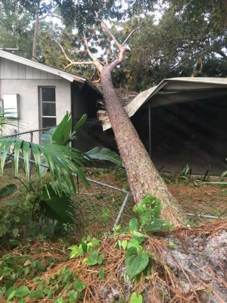 Tree on Home in Sarasota