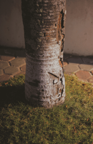 Decayed Tree