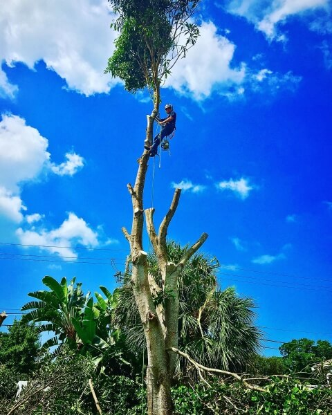 Tree Removal from Lamb Tree Care