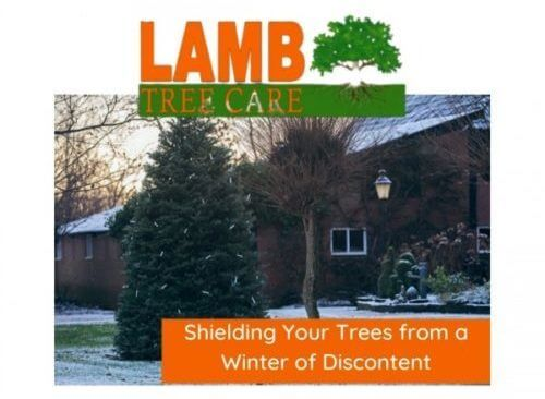 protect your trees during the winter with sarasota tree service